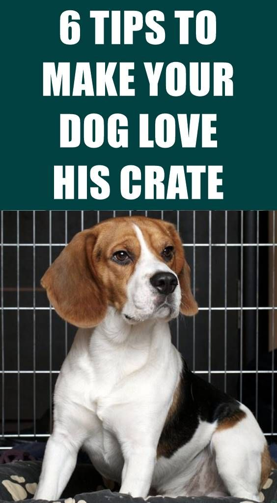 Pin By Elizabeth On Murphy Training Your Dog Dogs Crate Training