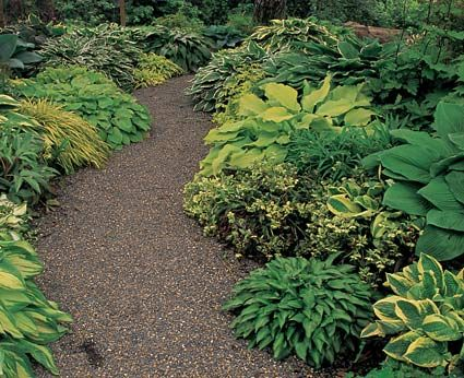Paths draw you into the garden