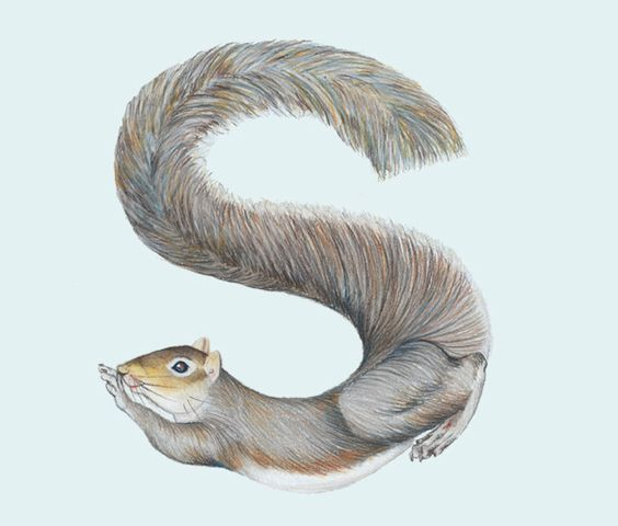 Beautiful Animal Name That Start With The Letter S With Picture With Images Alphabet Illustration Animal Alphabet Squirrel Print