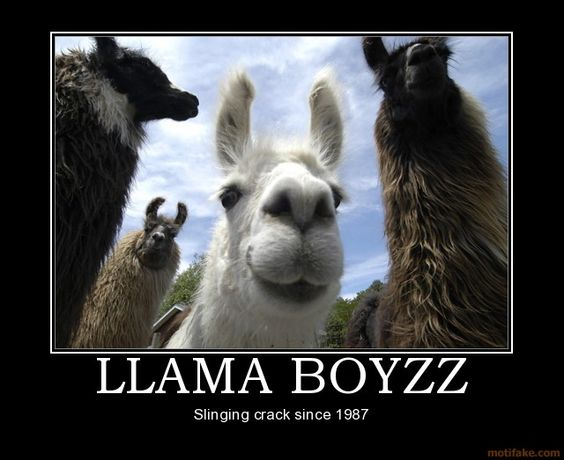 Llamas, I think of Tyler!!!