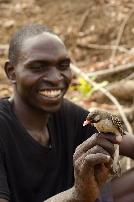Птичка,помогает африканцам в охоте за  медом.