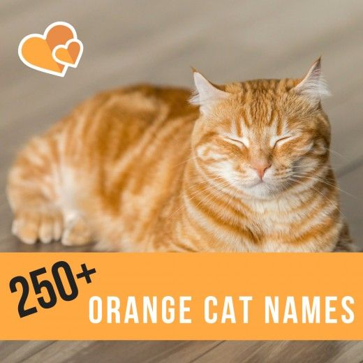 250 Best Name Ideas For Orange Cats Girl Cat Names Cat Names Boy Cat Names