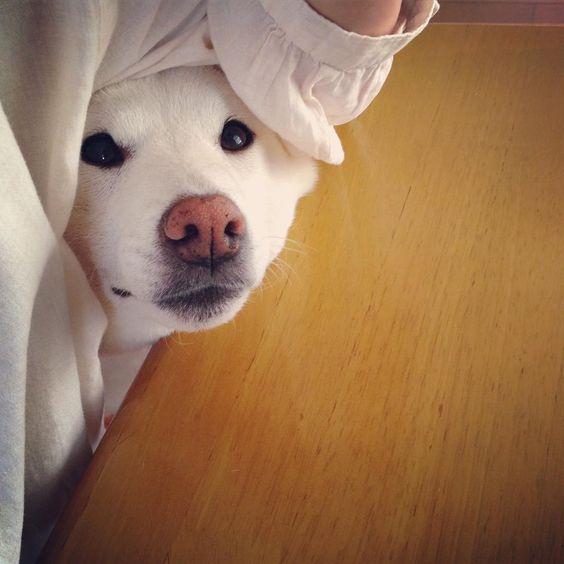 母ちゃん、今日の脇は 布きれがモサモサして入りにくかたワンよ。 明日から気をつけてくれワン。 ぷんすか。  #脇スチャッ