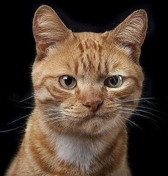 70% Off Anniversary Sale   2019 Litter Locker Cat Mat FREE Shipping [HOT Selling!