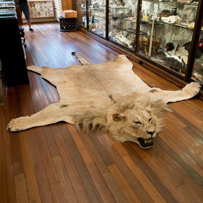 African Lion Rug Love My Safari Pinterest Rugs And. Fake Lion Skin Rug