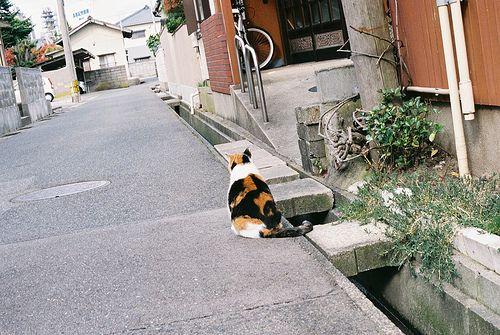 keunsori:    byKumiko_oMochi