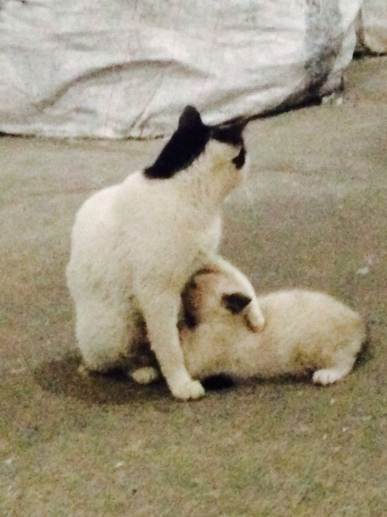Mãe é mãe .....