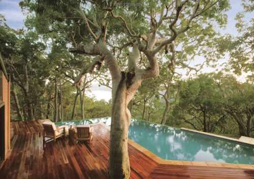 trees in the swimming pool