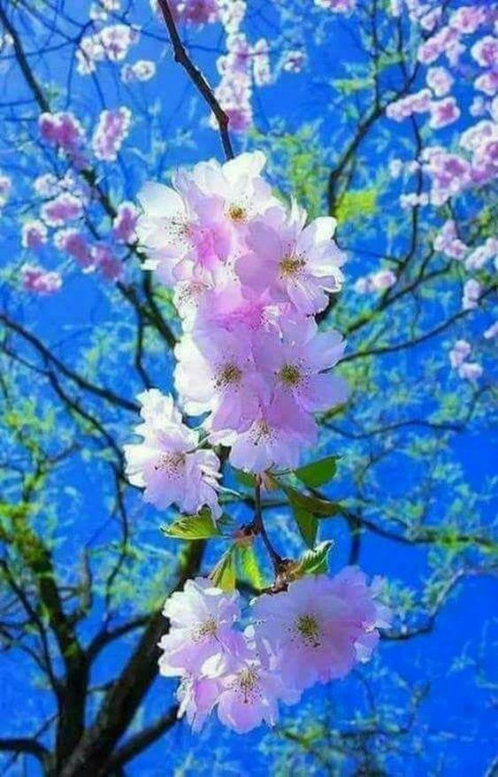 به امید حق با چند بارش درست وحسابی ..به استقبال بهار زیبا برویم ......خدایا به ایران رحم کن ..یا الرحم الراحمین ... - ایوب ربیع - Google+