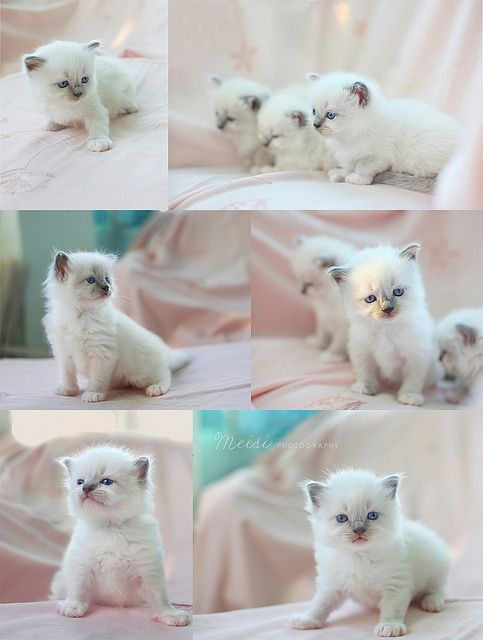 #cat #kitty #caturday