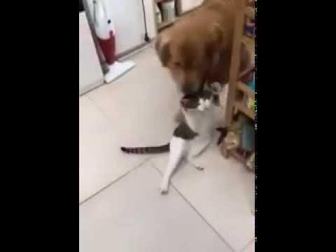 Go Get Your Brother For A Picture Funny Cat And Dog Youtube