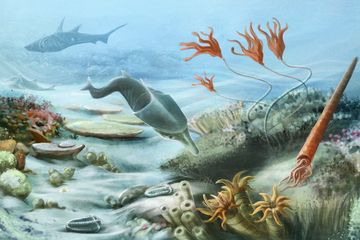 Silurian Period Facts: Climate, Animals & Plants