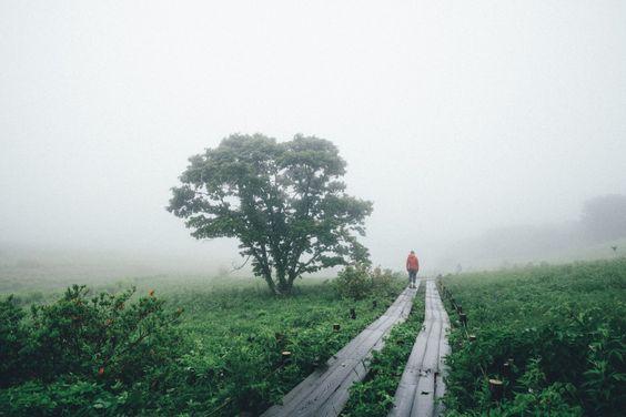 2015/06/27【長野写真合宿】霧の八島湿原