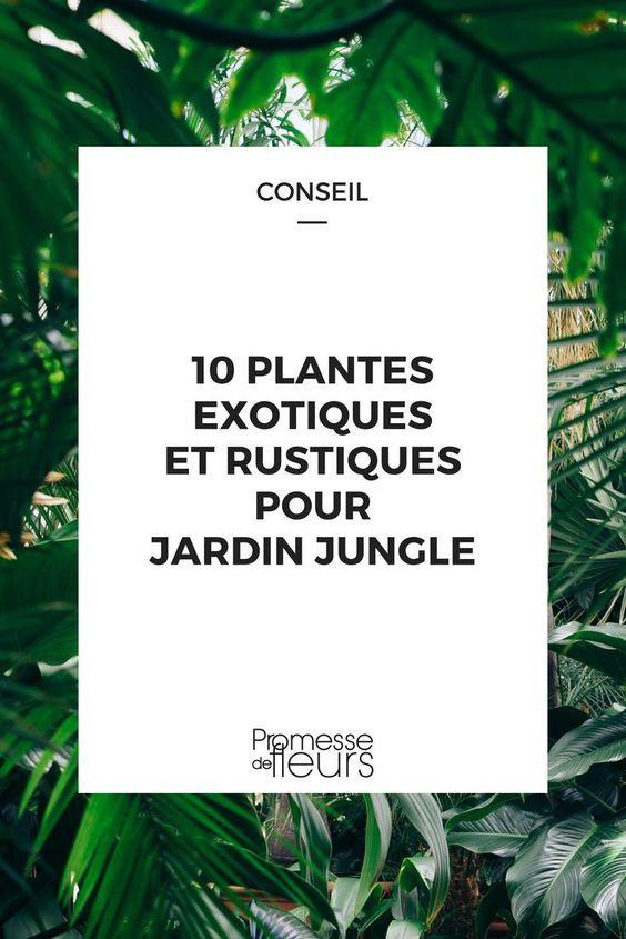 10 Plantes Exotiques Et Rustiques Pour Jardin Jungle Plante Exotique Jardin Exotique Et Jardins