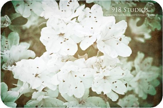 love NC flowers