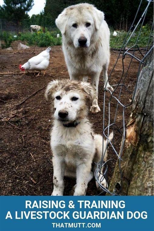 Dog Training Boston Hands Off Dog Training Review Youtube Dog