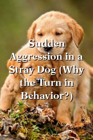 Pin On Cute Dog Quotes