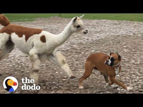 Pin On Baby Animals