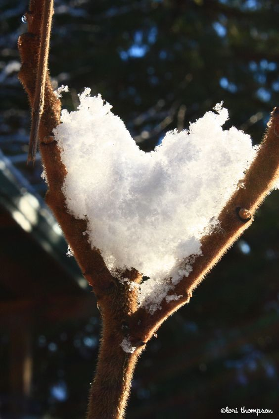 Snow heart - Winter & Nature Background Wallpapers on ...   Hearts In Nature Winter