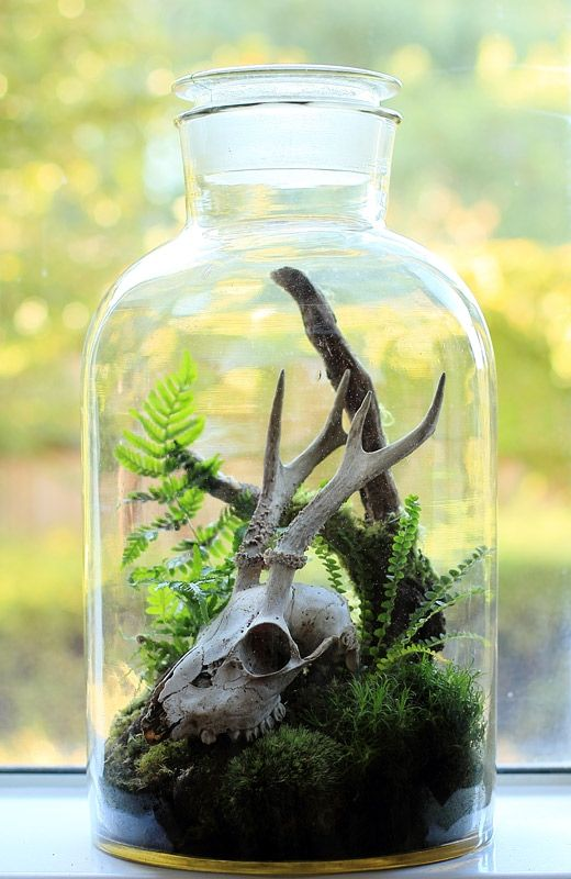 Terrariums are a bit weird & challenging to make, but some people really like these! There is plenty of material online you can search for a little guidance.   Skull Terrarium by ken martin