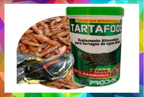 Comida Para Tortugas Con Imagenes Comida Recetas De Comida