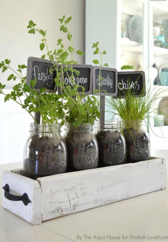 Herbs in old drawer inside fruit jars for kitchen window sill.: