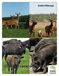 Le guide d'élevage Les grands gibiers domestiques se compose  de 21 feuillets techniques distincts traitant de l'élevage du cerf rouge, du wapiti, du bison et du sanglier. Outre le démarrage d'une entreprise, l'amélioration génétique, la médecine préventive, la viande et la commercialisation, ce guide d'élevage sur les grands gibiers s'intéresse à  la gestion de la reproduction, aux principales  maladies, à l'alimentation et aux installations d'élevage de chaque espèce.