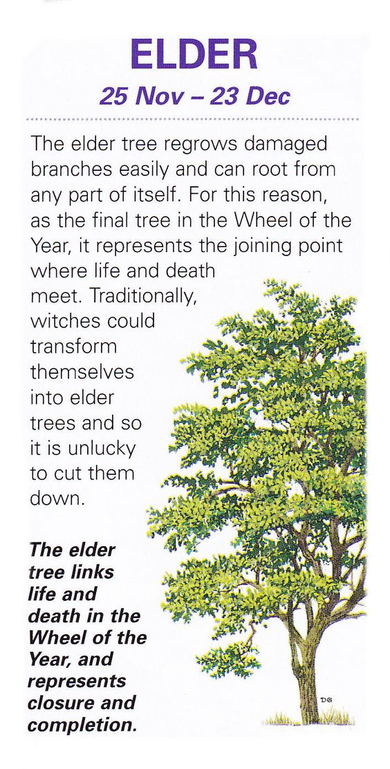 Sacred celtic trees Elder: