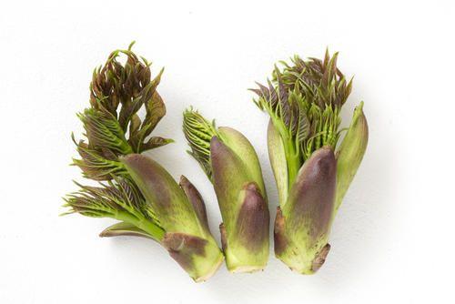 春の山菜といえばコレ タラの芽 の下処理方法やおすすめレシピ コラム オリーブオイルをひとまわし おすすめ レシピ レシピ 春 山菜