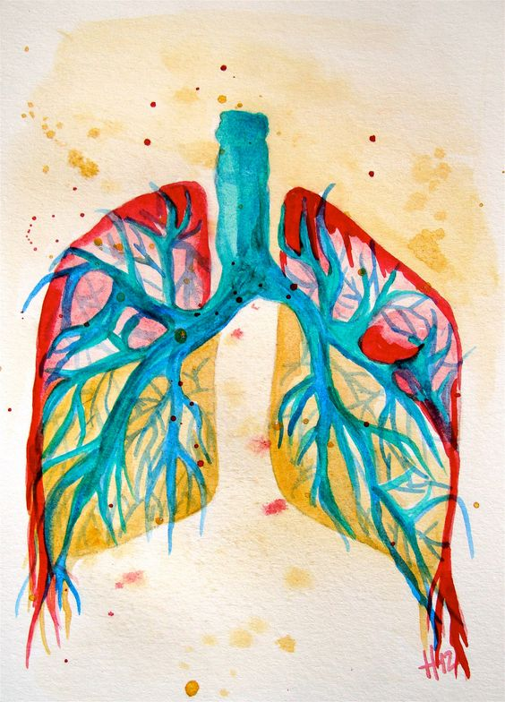 Lungs anatomy colorful original watercolor by shotviatheink $25.00
