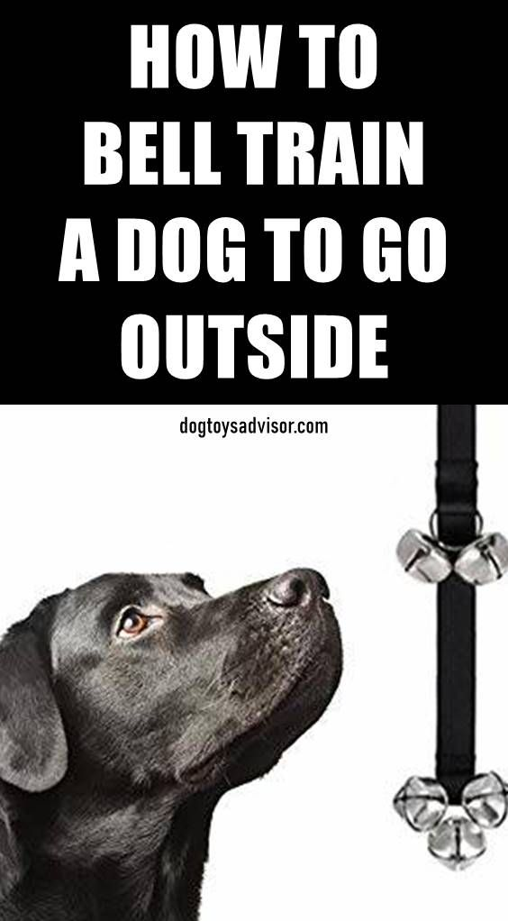 Do You Want To Teach Your Dog To Ring A Bell To Go Outside Find Out How To Train Your Dog To Ring A Bel Training Your Dog Dog Bell Training