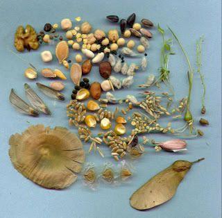 UE prohíbe la venta y reproducción de semillas autóctonas y tradicionales