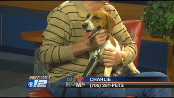 Beagle/Basset hound mix.  The best kind of dog ever!