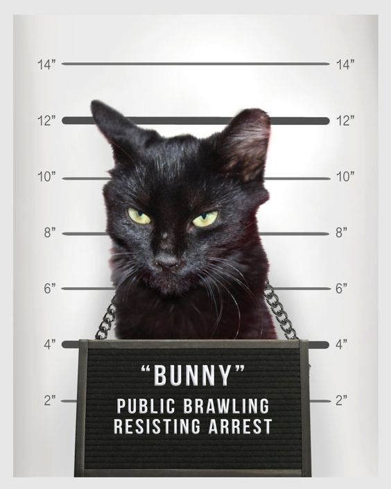 You KNOW what theyve done! Its time to out that feline delinquent and shame that canine criminal for your very own satisfaction. I mean, YOUre the one who had to clean it up, right? You deserve a giggle. Or is their only crime stealing your heart (though thats usually just the FIRST