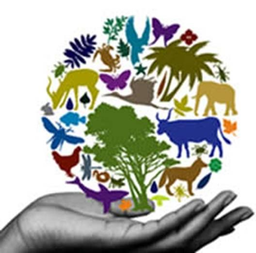 Biodiversidade La Biodiversidad Imagenes De Diversidad Cultural Manualidades Escolares