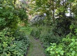 """Résultat de recherche d'images pour """"le jardin des lianes"""""""