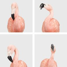 Four-Flamingos_TN