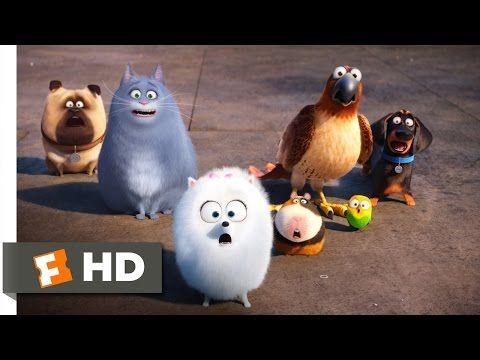 The Secret Life Of Pets Secret Route Scene 4 10 Movieclips Youtube Secret Life Of Pets Pets Movie Secret Life