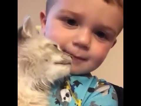 Cute Little Boy Says Meow With Cat Youtube Kitten Meowing
