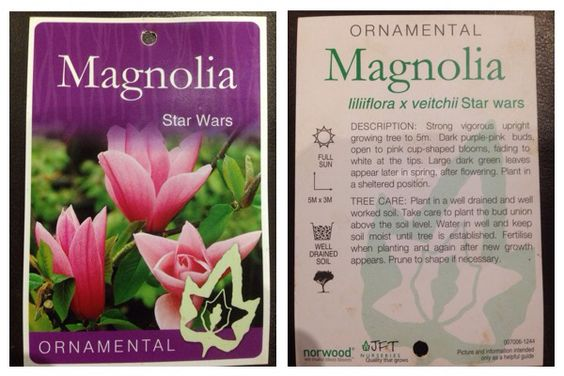 Magnolia Star Wars