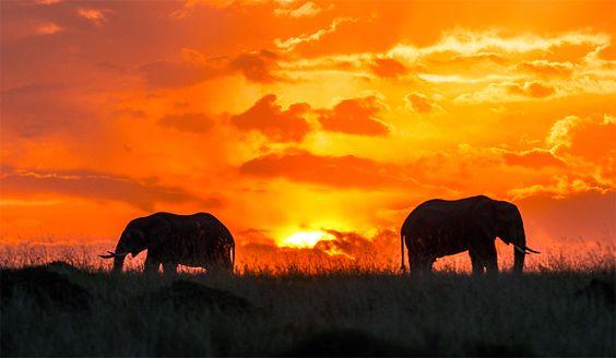 La réserve nationale du Masai Mara est aussi extraordinaire que la faune et la flore qu'elle abrite.