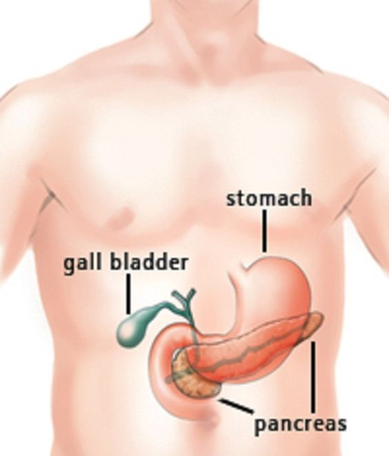 Pancreas Location   tenderness.co