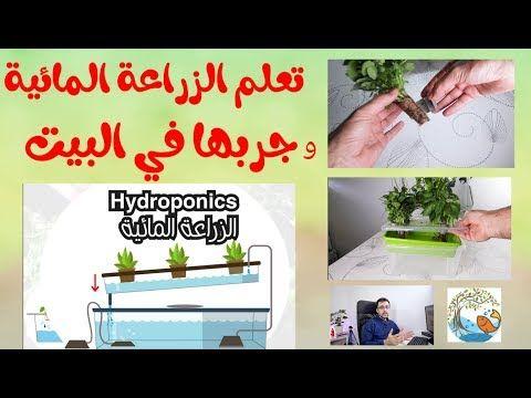 تعلم الزراعة المائية بطريقة سهلة و جربها في البيت Youtube Home Decor Decals Home Decor Hydroponics