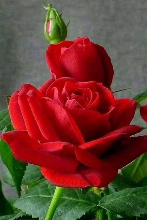 Pin On Beauty Roz