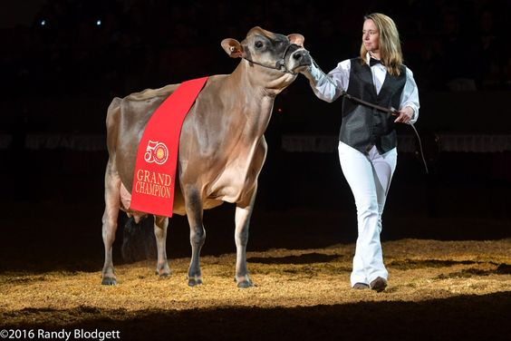 Musgie Iatola Martha-ET Named Supreme Champion of 2016 World Dairy Expo