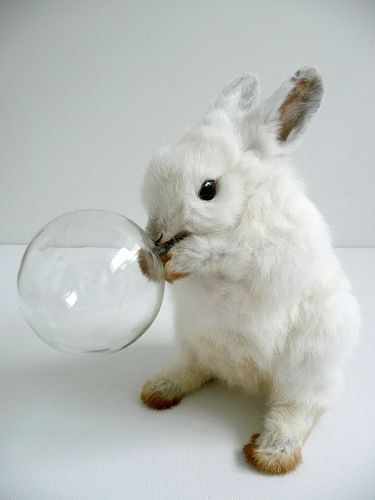Forever blowing bubbles: taxidermy bunny by Polly Morgan.: