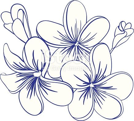 Beautiful Hand Drawn Plumeria Flowers Pretty Cute Sketch Flower Line Drawings Flower Drawing Tropical Flower Tattoos