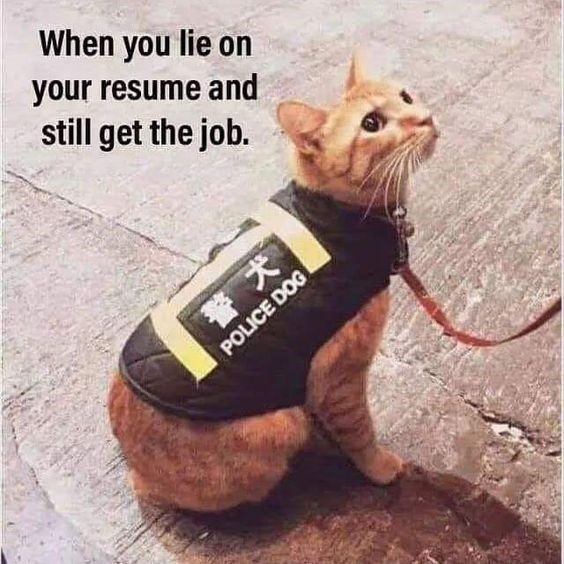 Animals Who Lied On Their Resume But Still Got The Job Memes Funny Animal Memes Funny Cat Memes Cute Funny Animals