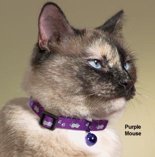Reflective Kitty Safety Collars; Great price verses box stores, not as much variety though.