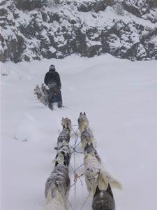 Dog sled tours, Lake Tahoe